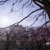 LOMO / 代々木公園