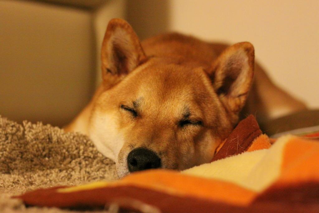 寝心地いいワン