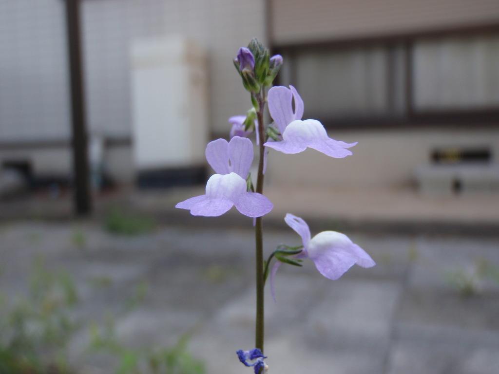 名を知らぬ花・・・。