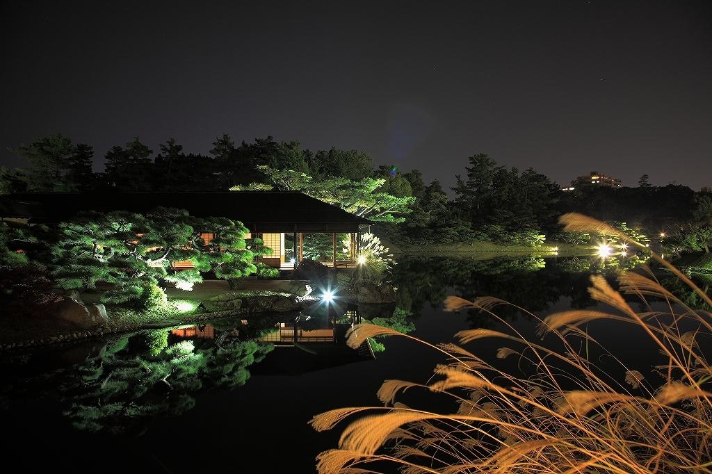 ススキ揺れる秋の夜