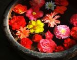深大寺の花つぼ