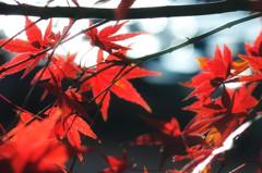 秋の到来…いや冬か。