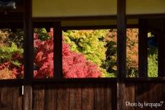 窓越しに秋