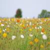 花いっぱい5