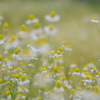 花いっぱい3