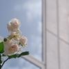 いろんな薔薇3