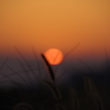 夕日とススキ2