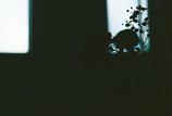 菊とかすみ草