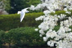 春の遊覧飛行