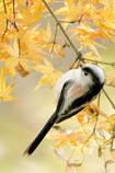 無邪気な秋の語らい
