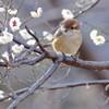 無邪気な春の語らい