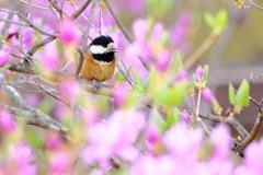 無邪気な春の語らい ~ 里山の春 ~