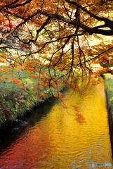 黄葉の水面