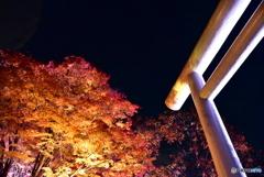 黄葉と鳥居ライトアップ