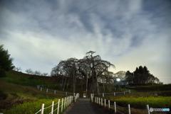 滝桜と夜空①