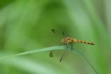 白神の昆虫(1)