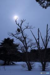 冬の薄ら日