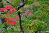 浄仙寺の秋 '17