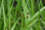 白神の昆虫(2)