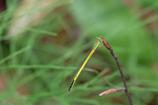 白神の昆虫(5)