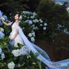 アジサイの花嫁
