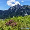 奇莱北山3607メートルと赤毛ツツジ