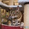 猫カフェにて (1)