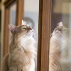 SONY ILCA-77M2で撮影した(猫カフェにて (7))の写真(画像)