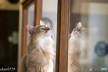 猫カフェにて (7)