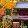 常隆寺の紅葉-7