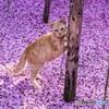 猫いる景色2