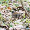 水辺の野鳥-2