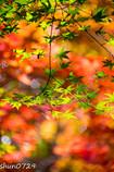 瑞宝寺公園の紅葉-6