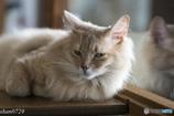 猫カフェにて (18)