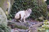 猫いる景色3
