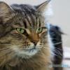 猫カフェにて (10)