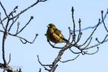 水辺の野鳥-7