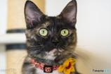 猫カフェにて (17)