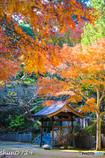 常隆寺の紅葉-8