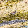 水辺の野鳥-6