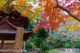 常隆寺の紅葉-2