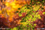 瑞宝寺公園の紅葉-1