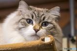 猫カフェにて (4)