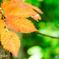 Leaf-2