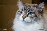 猫カフェにて (16)