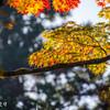 常隆寺の紅葉-4