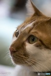 猫カフェにて (8)