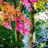 常隆寺の紅葉-5
