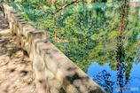 橋の上からの映り込み