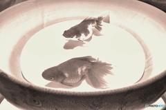 金魚の絵一枚